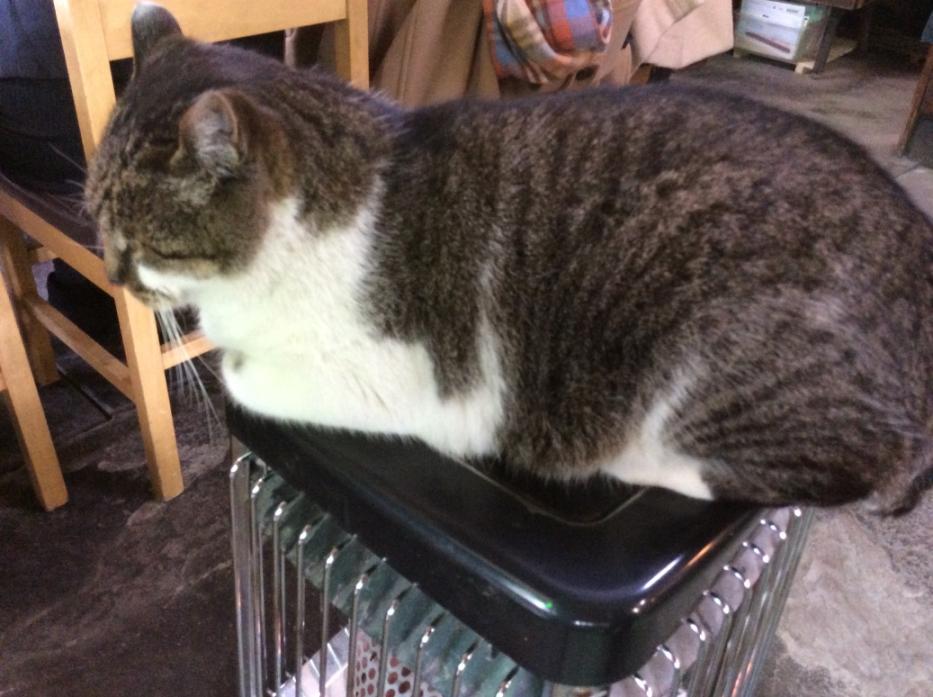 猫もストーブの上で・・・