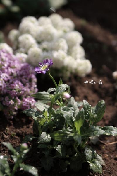 323miyako1.jpg