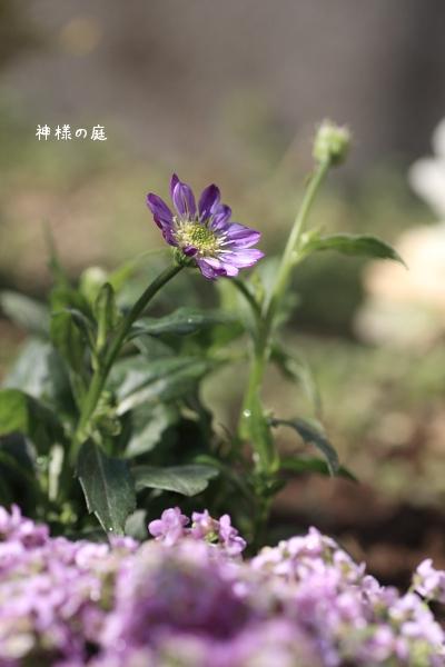 323miyako2.jpg