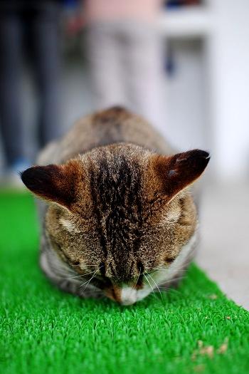 番猫ちゃん?