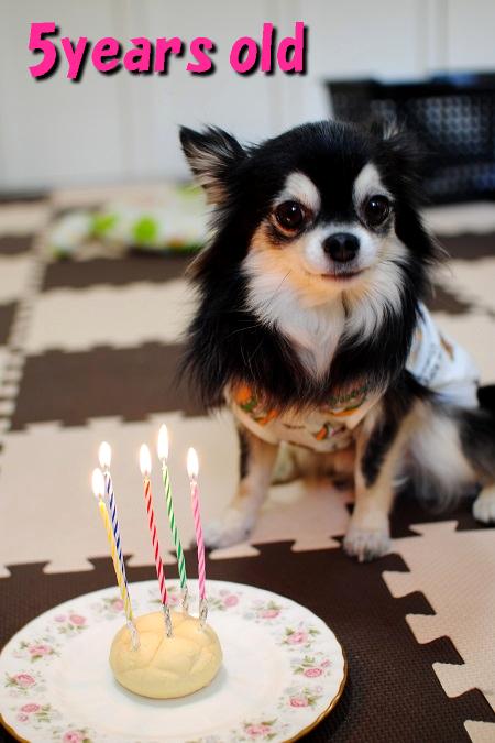 5歳のお祝い