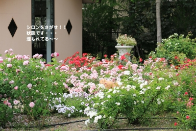 IMG_44620.jpg