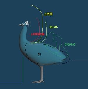 孔雀形状推測