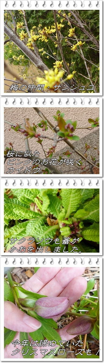 P1090464-vert.jpg