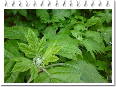 P1090885-vert.jpg