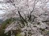桜窓から大きい