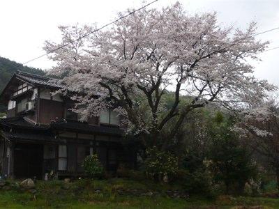 桜260403