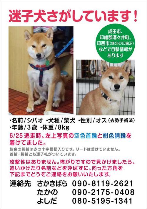 A4_shibao_3_convert_20140717161922.jpg