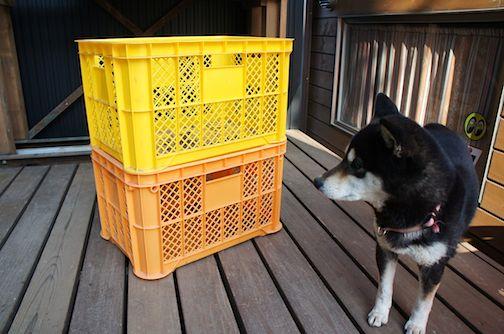 薪ーコンテナと犬