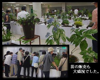児島山草展H26年6月①