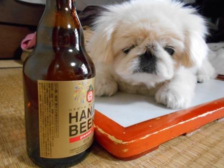 ハナビールと華