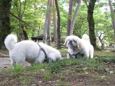 千秋公園初散歩