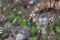 春の深まり6