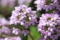6月の花1