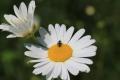6月の花4