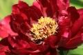 6月の花5