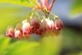 6月の花6