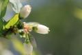 6月の花11