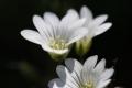 6月の花12