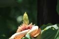 6月の花20