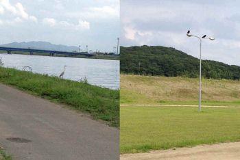 遠賀川13 (350x234)