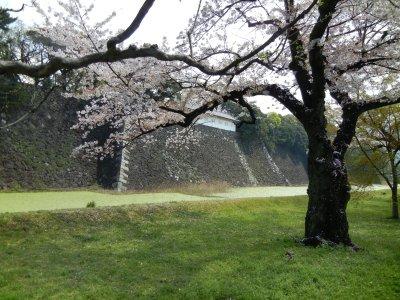 蓮池濠と多門
