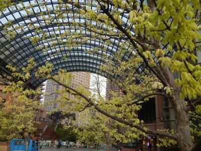 恵比寿ガーデンプレイス・楓の新緑