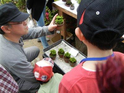 子どもにミニ盆栽の種木を買う親