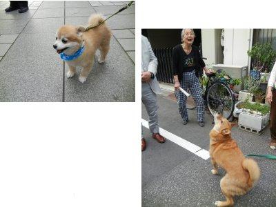 出くわした犬
