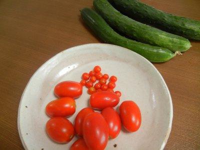 トマトとキュウリの収穫