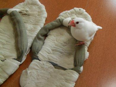 布草履と文鳥