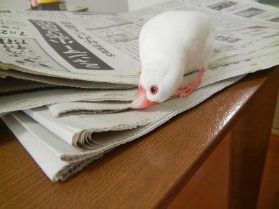 新聞紙と戯れる