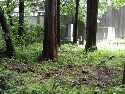 旧成願寺跡