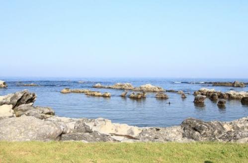 13-ステラ海