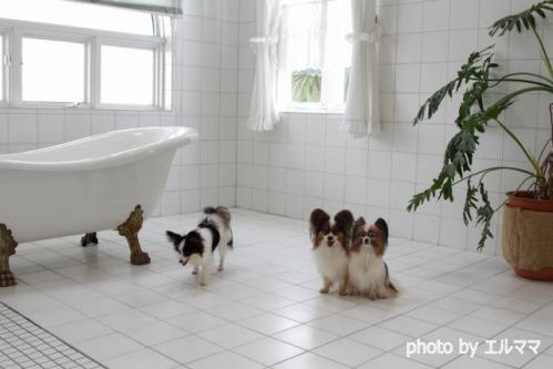 17-エルママ3パピと猫足風呂 エルママ
