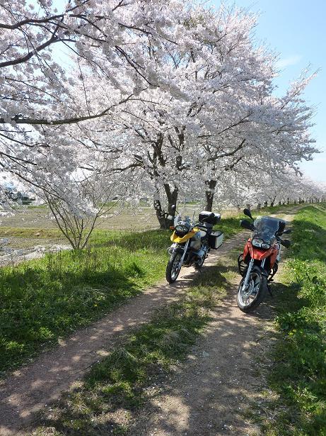 RF sakura