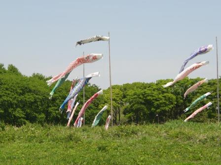 水元公園①鯉のぼり