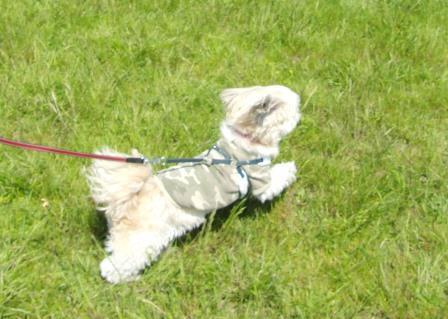水元公園②飛ぶ犬