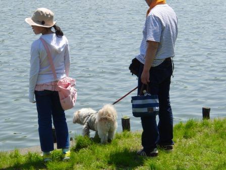 水元公園⑥池の中には何がいるのかな?