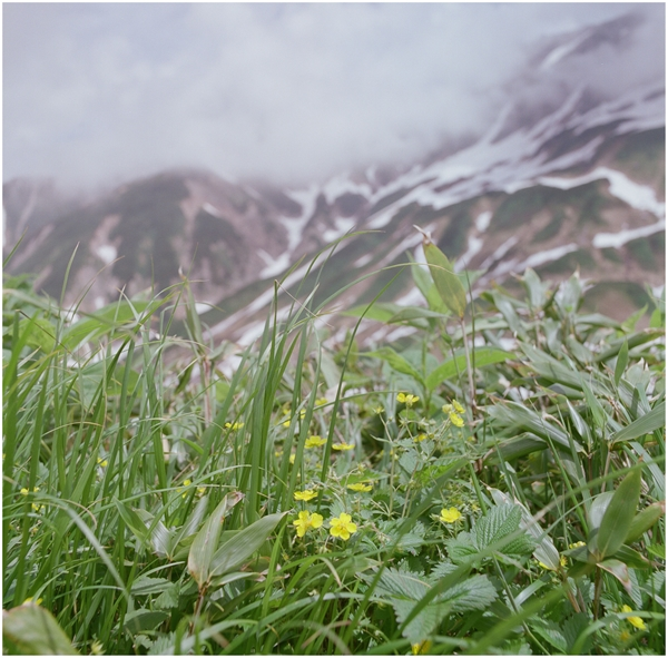 cf50-hassel-2014-7-20-fuzi400h-立山-756670007-イワオトギリ_R