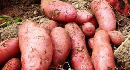 potato5.jpg