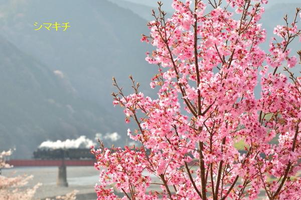 DSC_2481-nkr.jpg