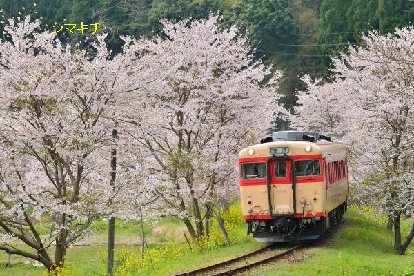 DSC_2609-nh.jpg