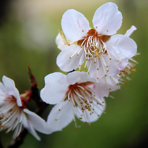 庭の花20140403 034