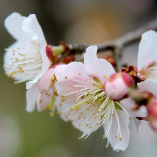 庭の花20140403 042