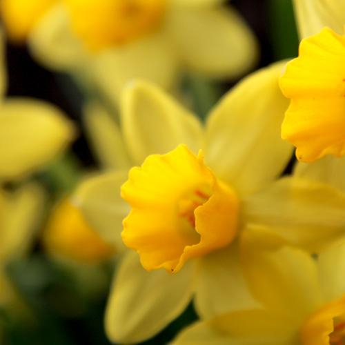 庭の花20140403 015