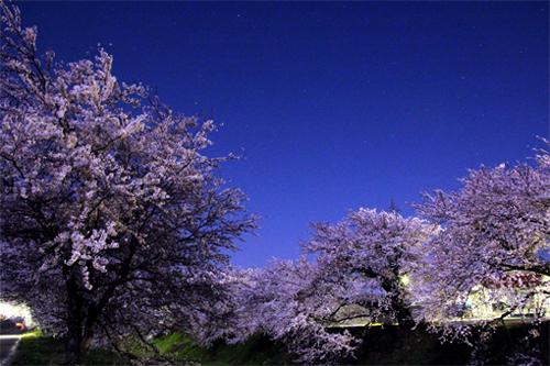 桜20140414 098-2
