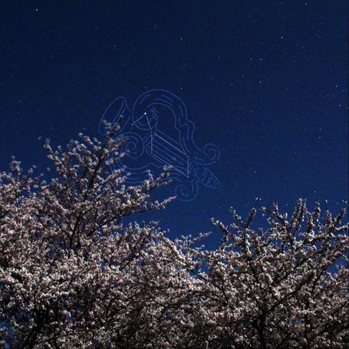 桜20140414 086(こと座)