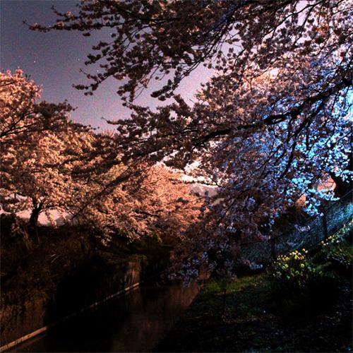 桜20140414 107