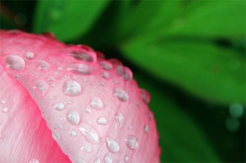 庭の花20140513 011